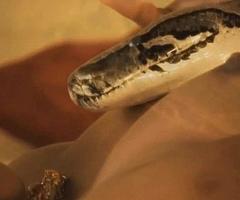 Sacred Whorl Serpent Rising MILF