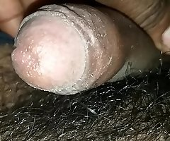 Indian cock